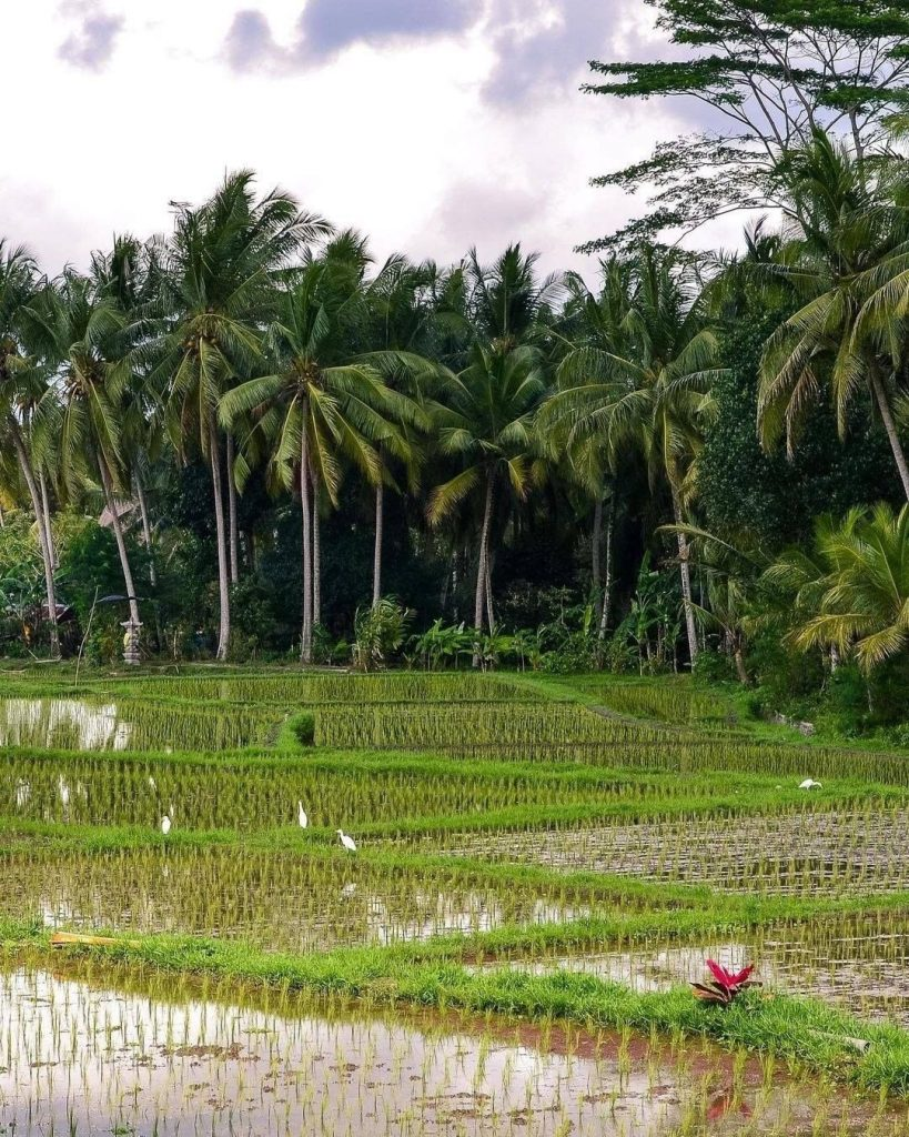 Preparing the Former Rice-Field Plot for Your Canggu Villas
